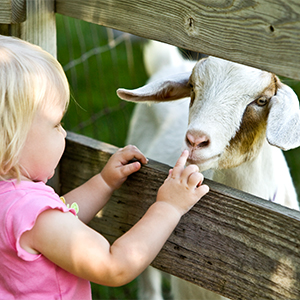 12 SoCal Spots for Kids Who Love Animals